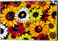 Sunflower Mix Fine-Art Print
