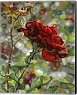 Last Rose Of Summer Fine-Art Print