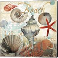 Shell Collector1 Fine-Art Print