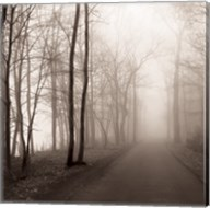 Foggy Path Fine-Art Print