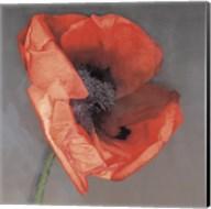 Rossa Fine-Art Print