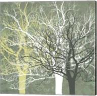 Silent Forest Fine-Art Print