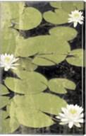 Pond Blossoms Fine-Art Print