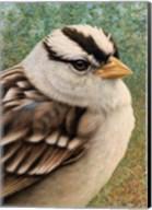 Sparrow Fine-Art Print
