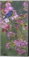 Bluebird Pink Blossoms Fine-Art Print