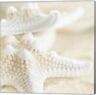 Seashore Stars Fine-Art Print