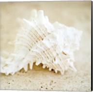 Seashore Shells II Fine-Art Print