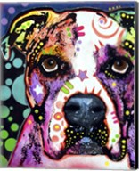 American Bulldog 1 Fine-Art Print