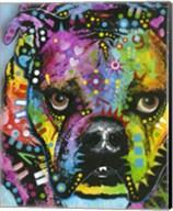 Little Dog Stare Fine-Art Print