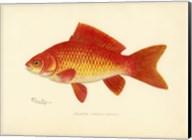 Goldfish Fine-Art Print