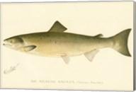 The Atlantic Salmon Fine-Art Print