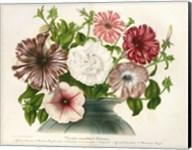 Varietes Nouvelles de Petunias Fine-Art Print