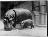 Adult and Baby Hippopotamus Fine-Art Print
