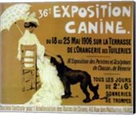 Exposition Canine Fine-Art Print