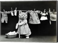 Kitty Laundry Fine-Art Print