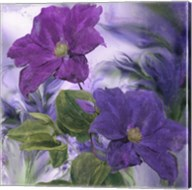 Purple Dream IV Fine-Art Print