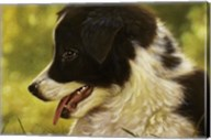 Border Collie Pup 2 Fine-Art Print