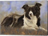 Collie Resting Fine-Art Print