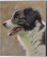 Border Collie 9 Fine-Art Print