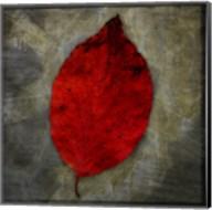 Red Dogwood Fine-Art Print