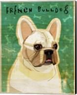 French Bulldog - White Fine-Art Print