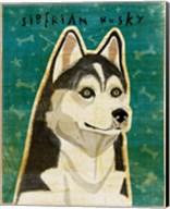 Siberian Husky Fine-Art Print