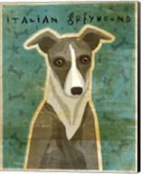Italian Greyhound - White and Grey Fine-Art Print