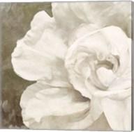 Petals Impasto II Fine-Art Print