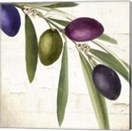 Olive Branch IV Fine-Art Print