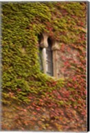 Ivy-Covered Wall, Ciudad Monumental, Caceres, Spain Fine-Art Print