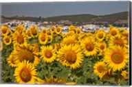 Spain, Andalusia, Cadiz Province, Bornos Sunflower Fields Fine-Art Print