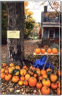 Pumpkins For Sale in New England Fine-Art Print
