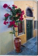 Bougenvillia Vine in Pot, Oia, Santorini, Greece Fine-Art Print