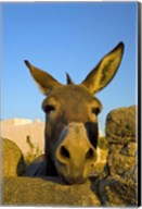 Greece, Mykonos, Hora, Donkey and Stone Fence Fine-Art Print