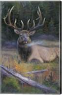 South Fork Bull Fine-Art Print