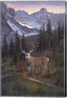 High Country Muley Fine-Art Print