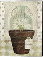 Herb Pot Lavender Fine-Art Print