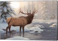 Elk Bugleing Fine-Art Print