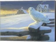 Northern Guest Fine-Art Print