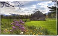 Spring Barn Fine-Art Print