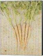 Herb Still Life III Fine-Art Print