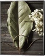 Leaf Fine-Art Print