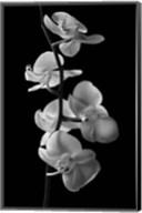 Orchids 1 Fine-Art Print