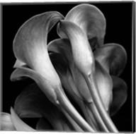 Lillies2 Fine-Art Print