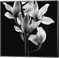Orchids 3 Fine-Art Print