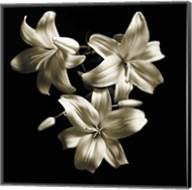 Three Lilies Fine-Art Print