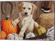 Pumpkin Harvest Puppy Fine-Art Print