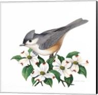 Studio Friends - Titmouse Fine-Art Print