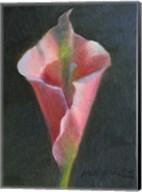 Pink Cala Lily Fine-Art Print