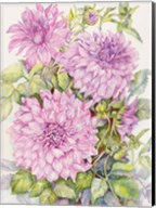 Lavender Dahlias Fine-Art Print